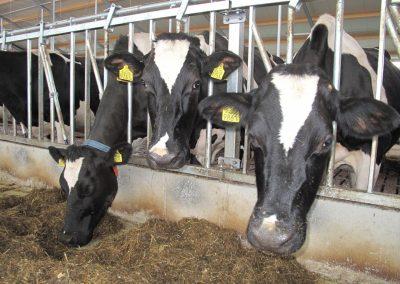 Melkveehouderij | Veld-Zicht