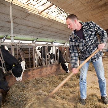 Melkveehouderij Veld-Zicht